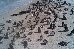 Cape of Good Hope Cape Point Penguins Kirstenbosch Tour from Stellenbosh at 9h00