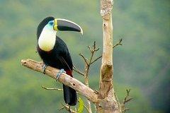 Imagen 4 Day Manu Bird Watchers Paradise - Group Service
