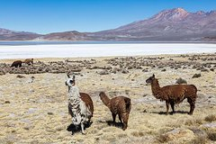Imagen Excursión de un día para grupos pequeños a la laguna salada de Salinas desde Arequipa