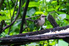 Imagen Birdwatching Tour in El Chorro waterfall and Yunguilla Jocotoco Reserve from Cuenca