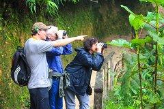 Imagen Birdwatching Tour in Tinajillas Forest area from Cuenca