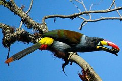 Imagen Birdwatching Tour in Cajas National Park from Cuenca