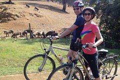 Imagen Countryside Bike Tour in Seville
