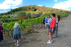 Chianti Classico & Super Tuscan 3 Winery Tour - Daily Departure from Fl