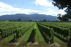 Imagen Private: Blenheim Wine tour including Wine Making