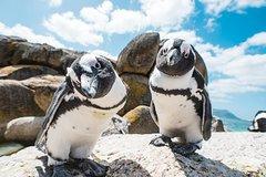 Cape Point Boulders Beach(Penguins) And Kirstenbosch Gardens