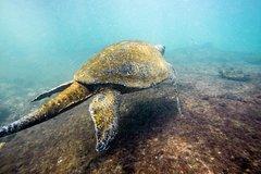 Imagen Esnórquel en las Islas Galápagos desde Isla Isabela