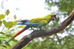 Imagen Observación de aves en Cerro Blanco desde Guayaquil