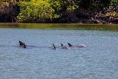Imagen Avistamiento de delfines en Puerto El Morro desde Guayaquil