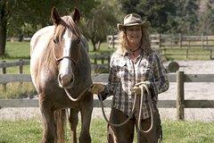 Imagen River Valley Stables - Harmony With Horses, Half Day Horsemanship & Trek