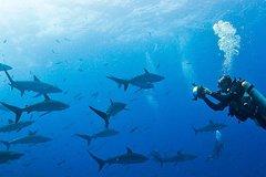 Imagen Diving Tour: Española Island