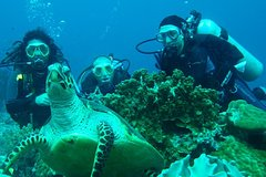 Imagen Diving Tour: Bahia Darwin and Carahua
