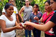Imagen Escapada de un día a una granja de cacao desde Guayaquil