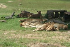 Best of Kenya Experience
