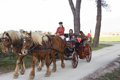 Coach, horse and pic-nic through the vineyard in Umbria