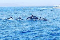Activities,Activities,Activities,Water activities,Water activities,Water activities,Nature excursions,Sports,