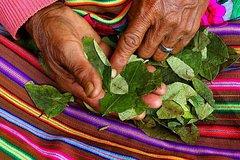 Imagen Coca Leaf Reading In Cusco