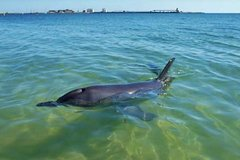 Imagen Bunbury Dolphins Discovery Tour - Fly From Perth