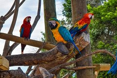 Imagen Aviario National Park Shared Tour