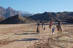 Ver la ciudad,Actividades,Gastronomía,Tours de un día completo,Actividades de aventura,Adrenalina,Comidas y cenas especiales,Excursión a desierto egipcio