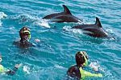 Imagen Kaikoura Swim with Dolphins Tour from Christchurch
