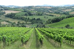 From Bologna: Wine Tasting and Vineyard Tour