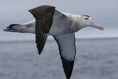 Imagen Kaikoura Albatross Encounter Tour from Christchurch
