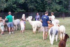 Alpaca Farm Tour in Adairsville Georgia