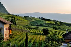 Tuscany Wine Tour from Rome with Private Driver