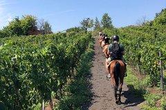 Horse Riding Experience on Vesuvius w/ Wine Tasting