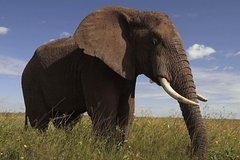 Madibeng North-West Province Elephant Tour from Johannesburg or Pretoria 13066P13