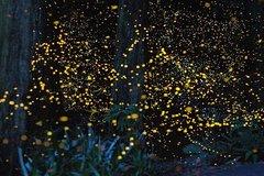 Imagen Private Tour: Kuala Selangor Fireflies River Ride Including Dinner from Kuala Lumpur