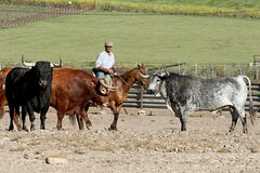 Imagen Andalusia Horses Show and Visit to Medina Sidonia from Seville