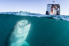 Activities,Activities,Activities,Water activities,Water activities,Adventure activities,Nature excursions,Nature excursions,Sports,Whale Shark Snorkel