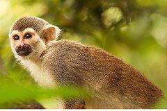 Imagen 4 Days - Tambopata Eco Tour