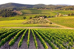 Small Group Tour: Siena San Gimignano and Chianti Full Day