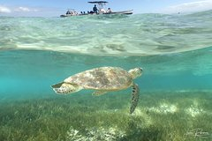 Signal Island Turtle Tour from Noumea