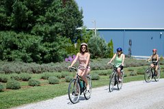 City tours,City tours,Bike tours,