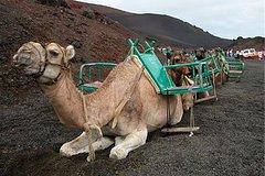 Playa del Ingles Gran Canaria Maspalomas Dunes Camel Ride 16536P50