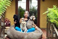 Peaceful Paws - A Southwest Canine-Human Spiritual Adventure