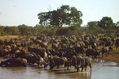 4 days Kruger National park tour