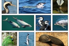 Imagen Wildlife and Dolphin Ecotour Cruise from Picton