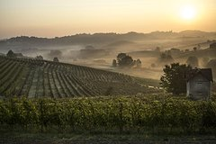 The Great Wine Tour from Milan - VIP experience of Barolo and Spumante