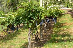 Valpolicella Day Trip from Venice: Wine Tasting and Verona