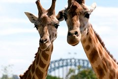 Imagen Sydney Harbour Cruise with Taronga Zoo Entry Ticket