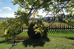 Verona Small Group wine tour