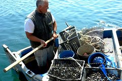 A traditional food experience in La Spezia: from the mussels-farm to the table