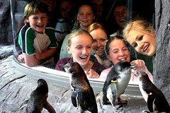 Activities,Water activities,Christchurch Tour