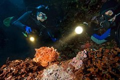 Hurghada Red Sea and Sinai Night Diver Specialty Course 108808P22