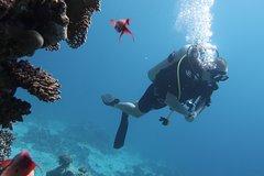Hurghada Red Sea and Sinai SSI Advanced Adventurer Diver 108808P30